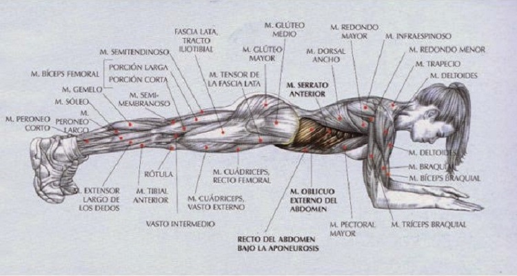 corredor ejercicios fuerza